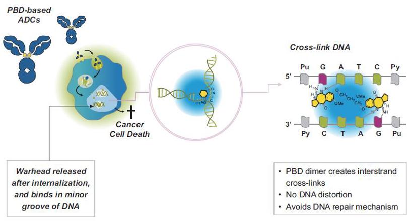 PBD-based-ADC